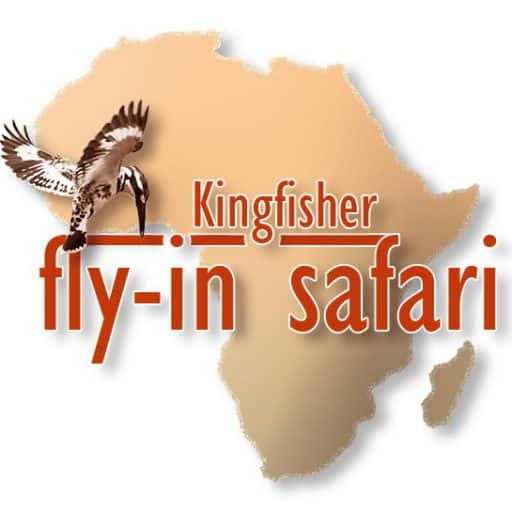 Kingfisher fly in Safari